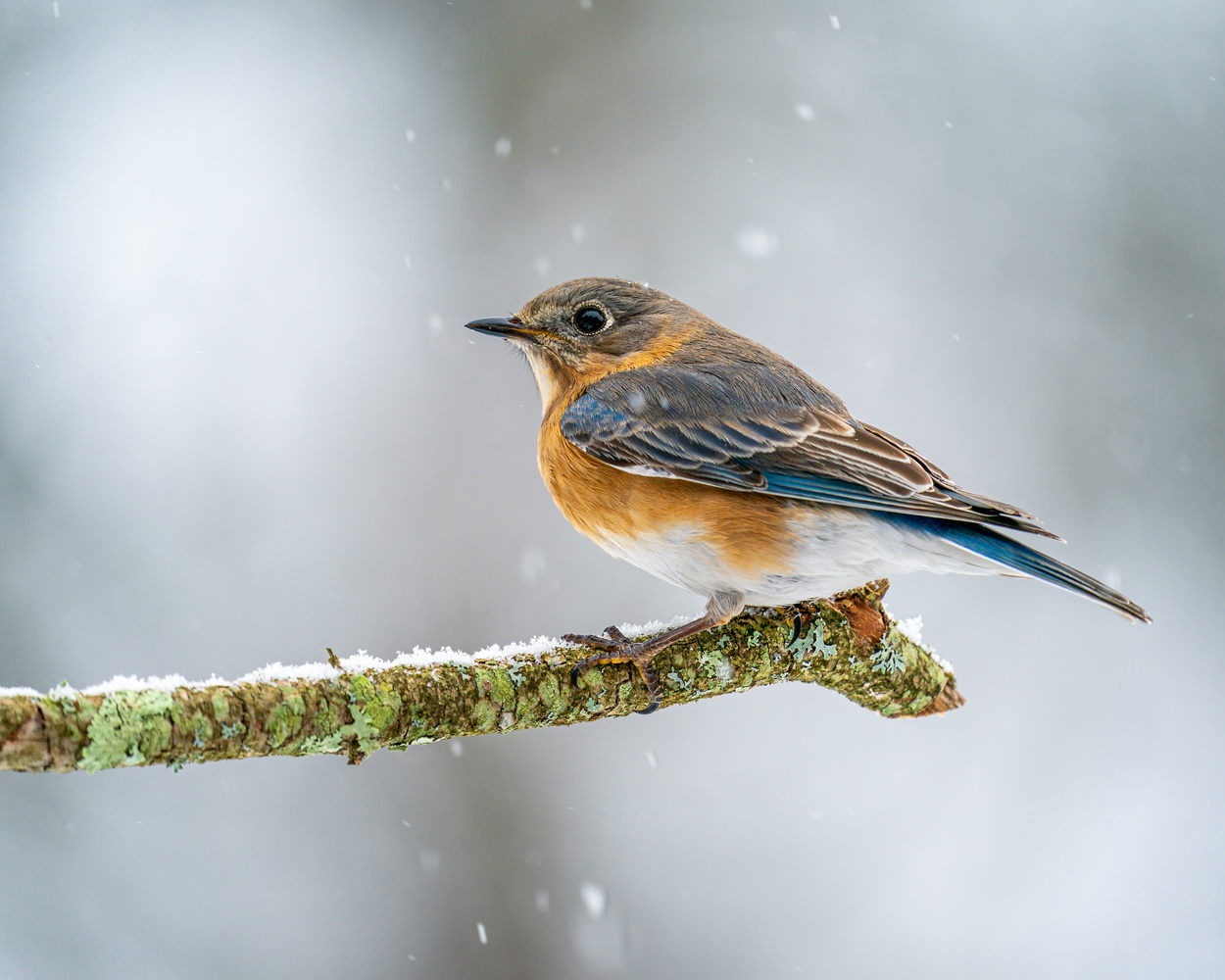 Bluebird by Skyler Ewing