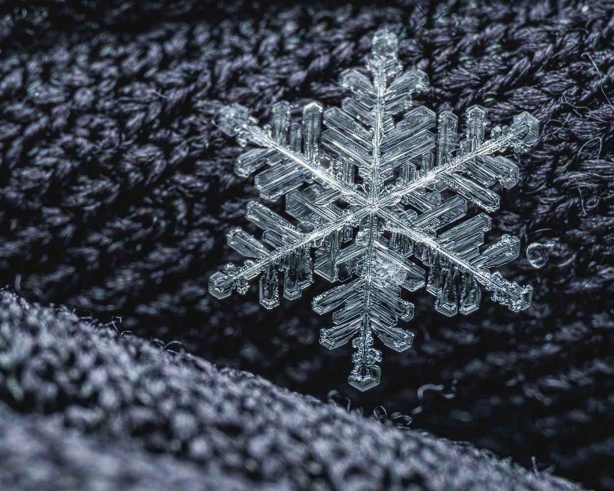 Snowflake by Skyler Ewing