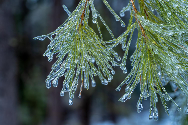 Icy by Skyler Ewing