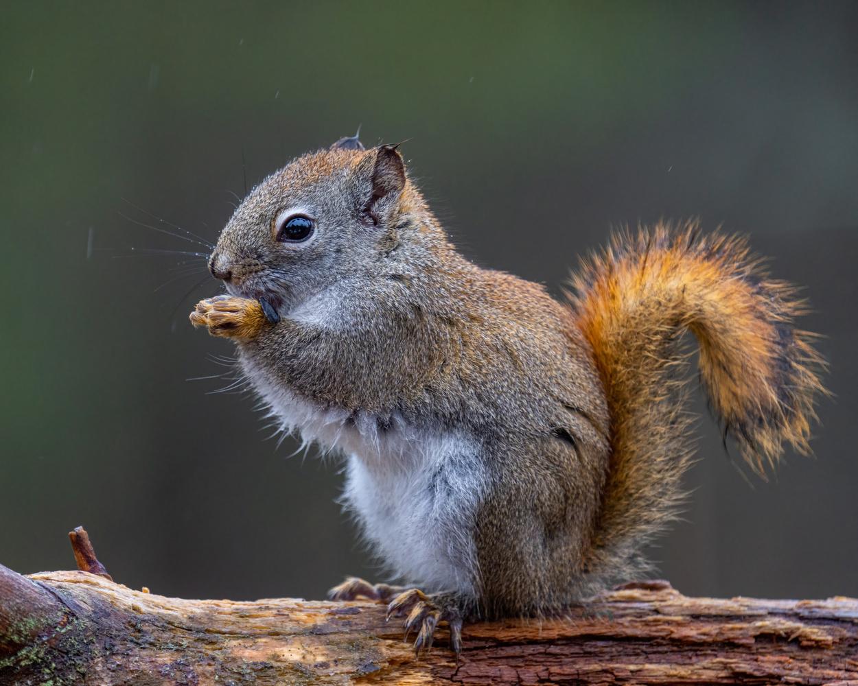 Squirrel in the rain by Skyler Ewing