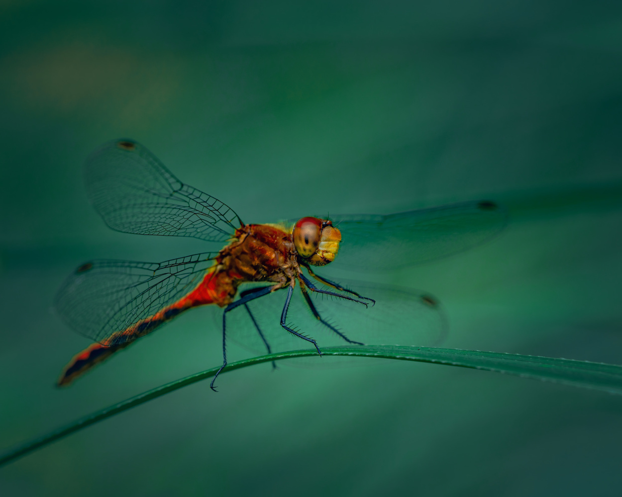 Dragonfly by Skyler Ewing