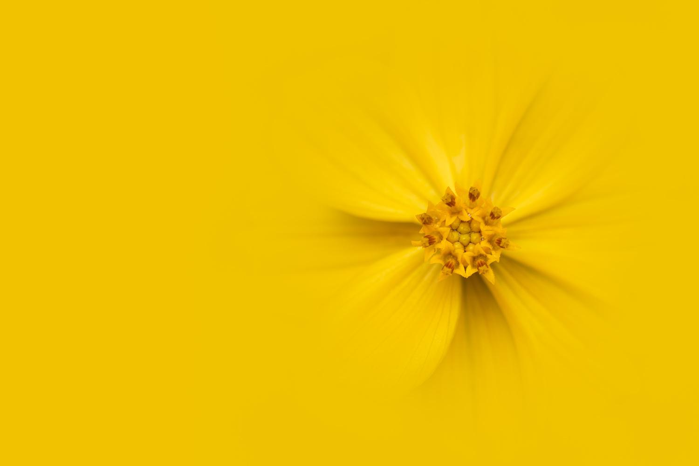 Yellow by Skyler Ewing