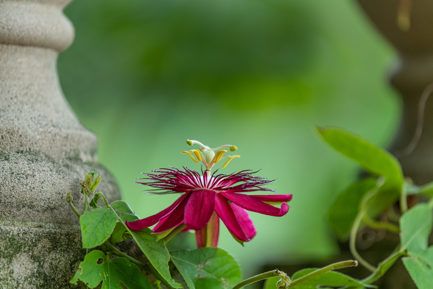 Passion flower by Skyler Ewing