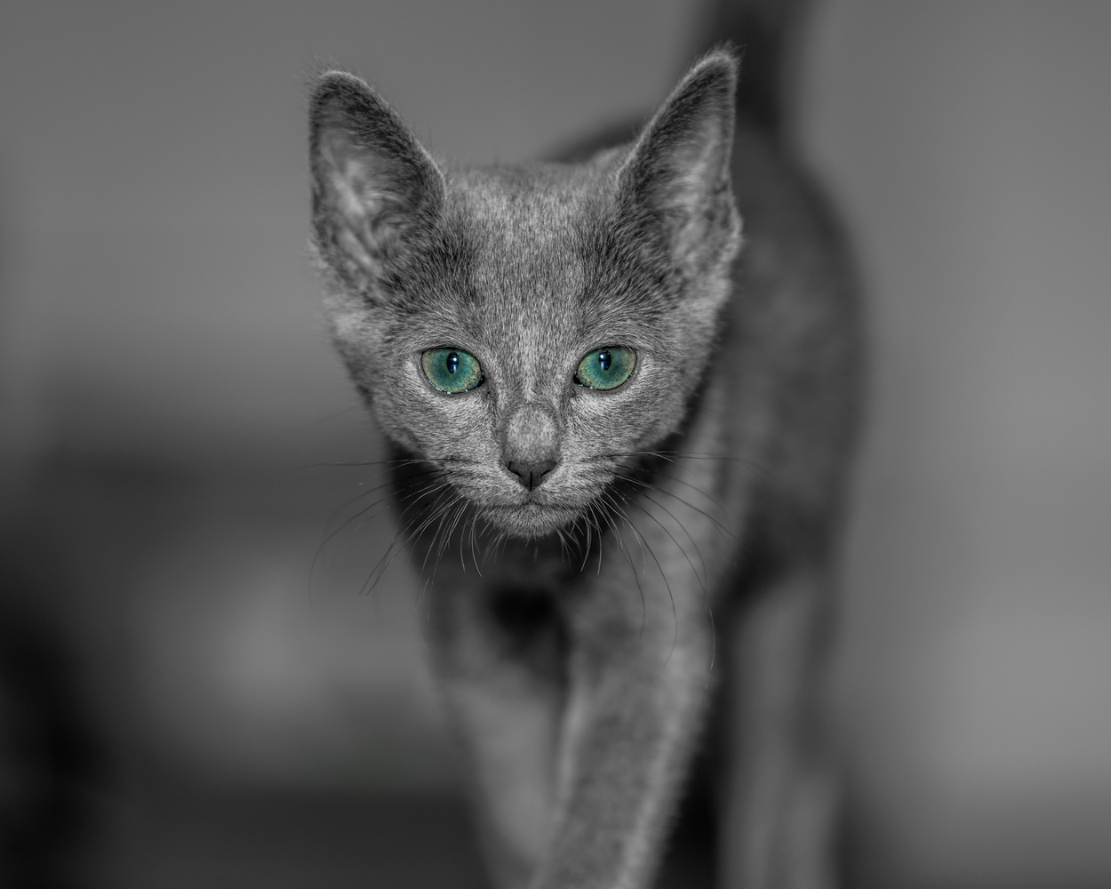 Cat by Skyler Ewing