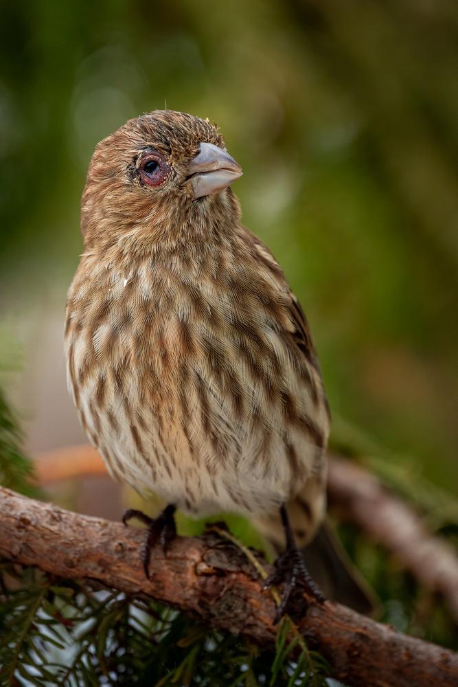 Injured bird by Skyler Ewing