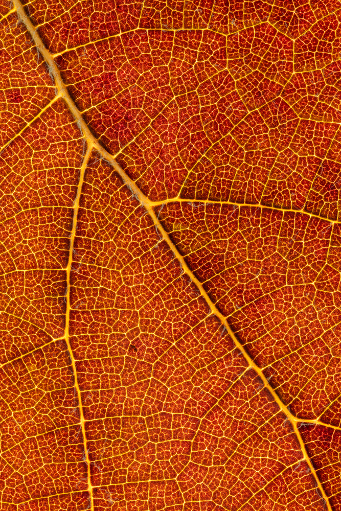Leaf by Skyler Ewing