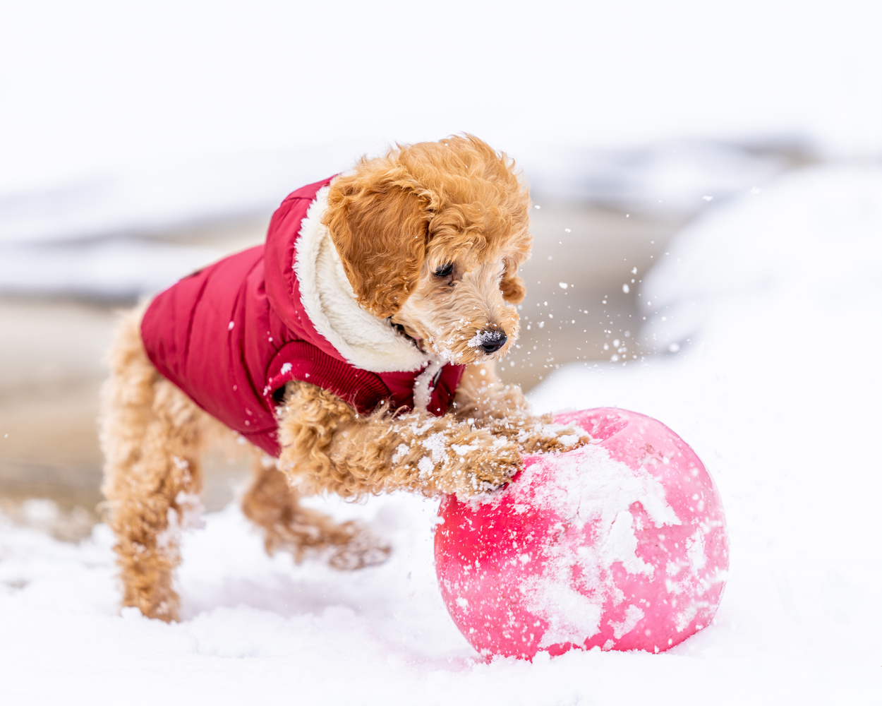 Puppy by Skyler Ewing