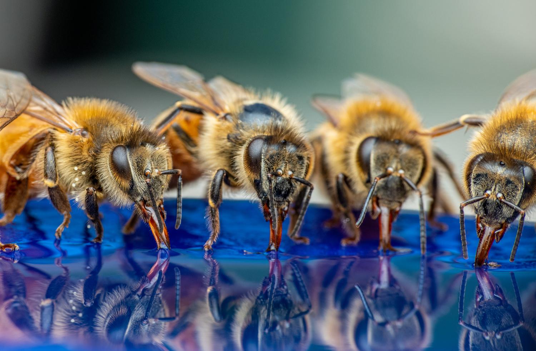 Bees by Skyler Ewing