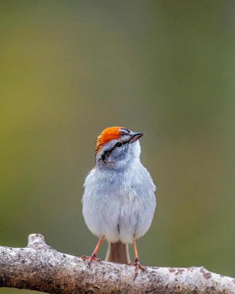 Sparrow by Skyler Ewing
