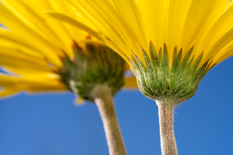 Yellow daisy by Skyler Ewing