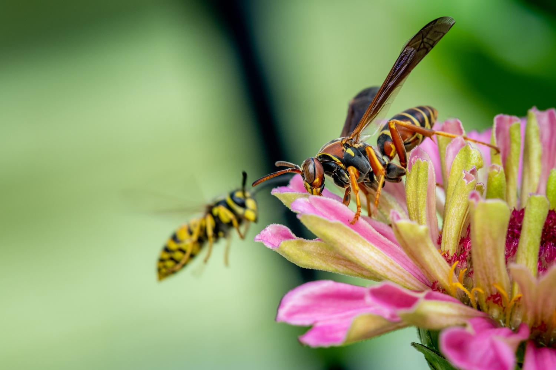 Wasp by Skyler Ewing