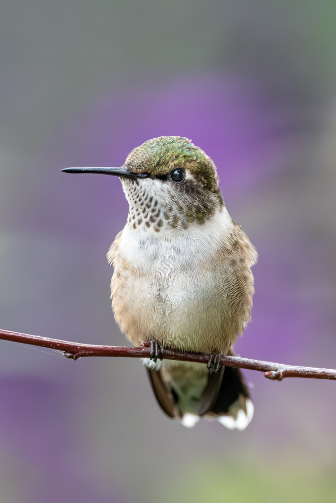 Hummingbird by Skyler Ewing