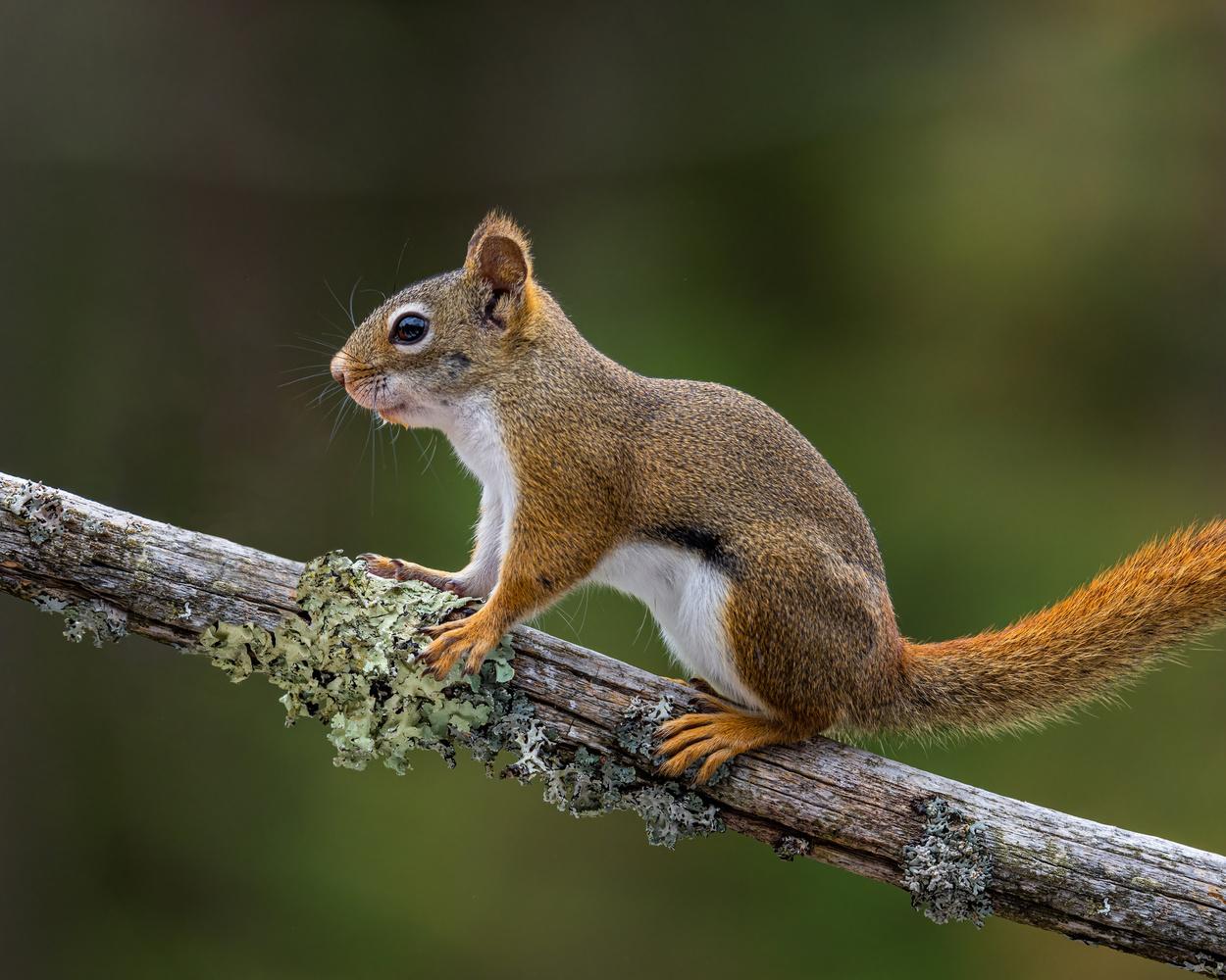 Squirrel by Skyler Ewing