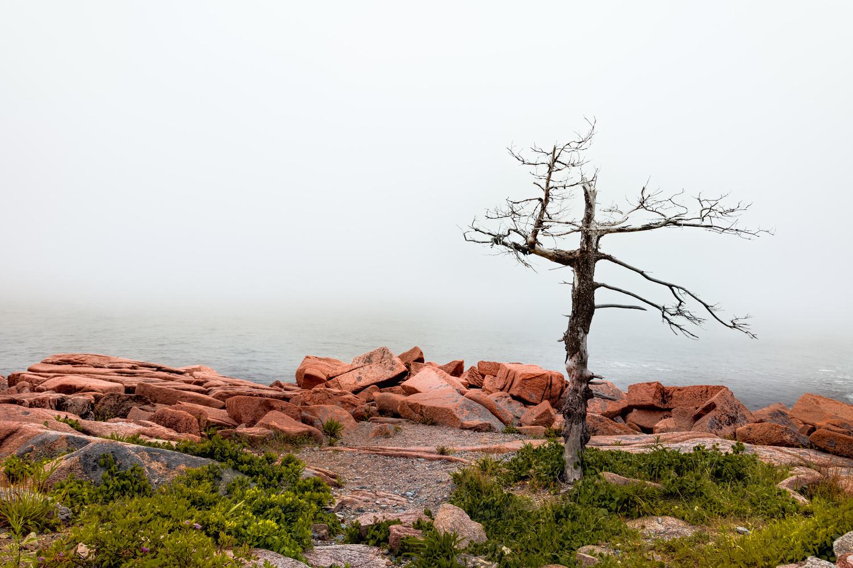 Lonely tree by Skyler Ewing