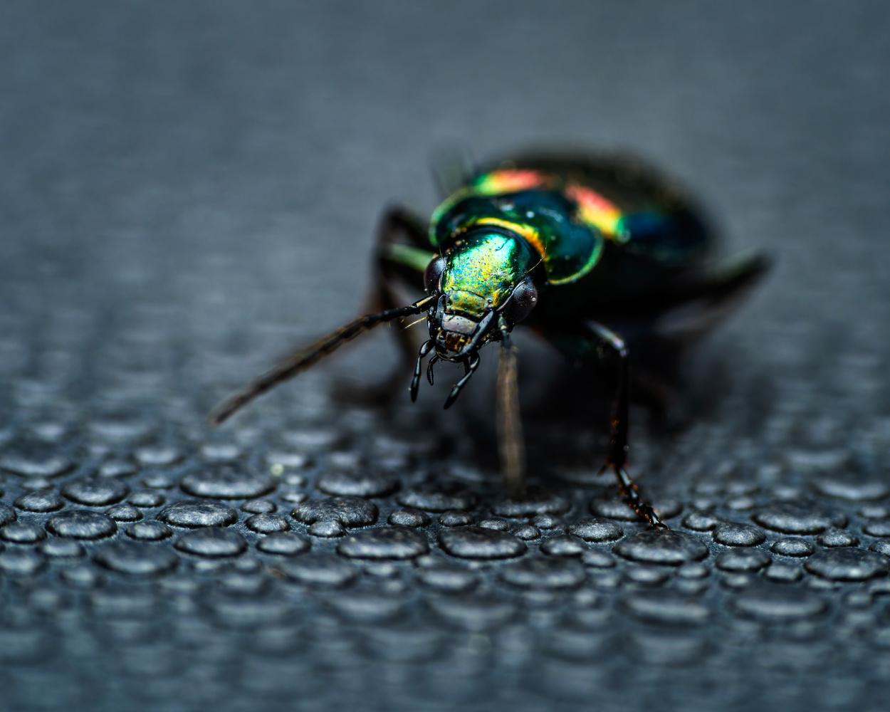 Beetle by Skyler Ewing