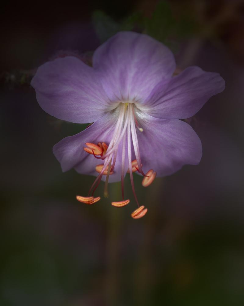 Flower by Skyler Ewing