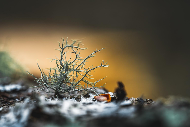Tree bark by Skyler Ewing