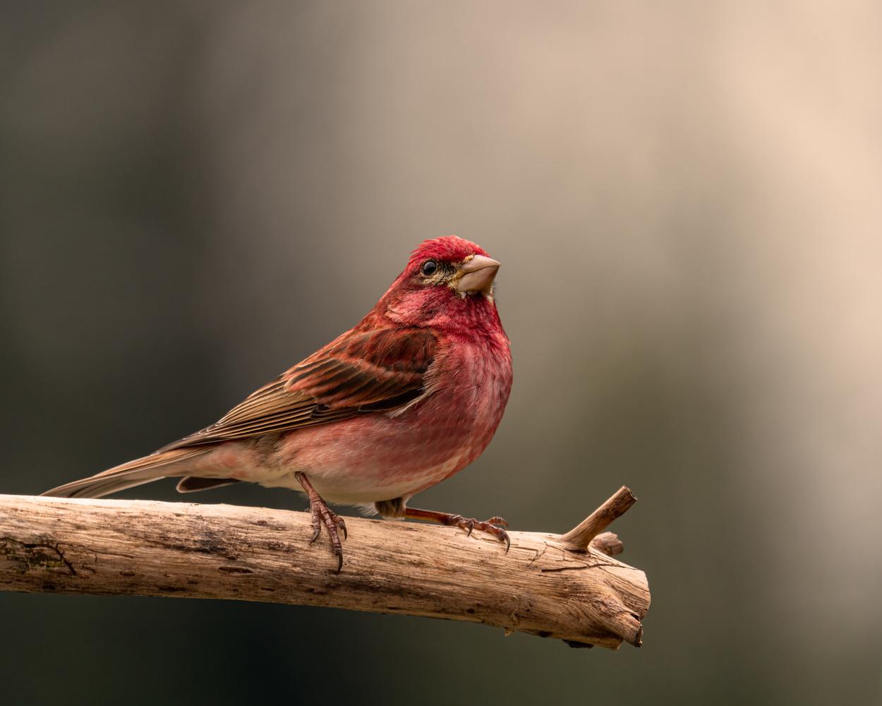 Finch by Skyler Ewing