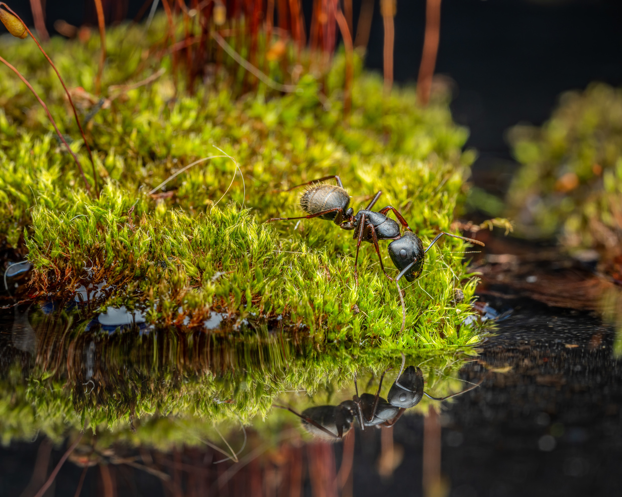 Ant reflection by Skyler Ewing
