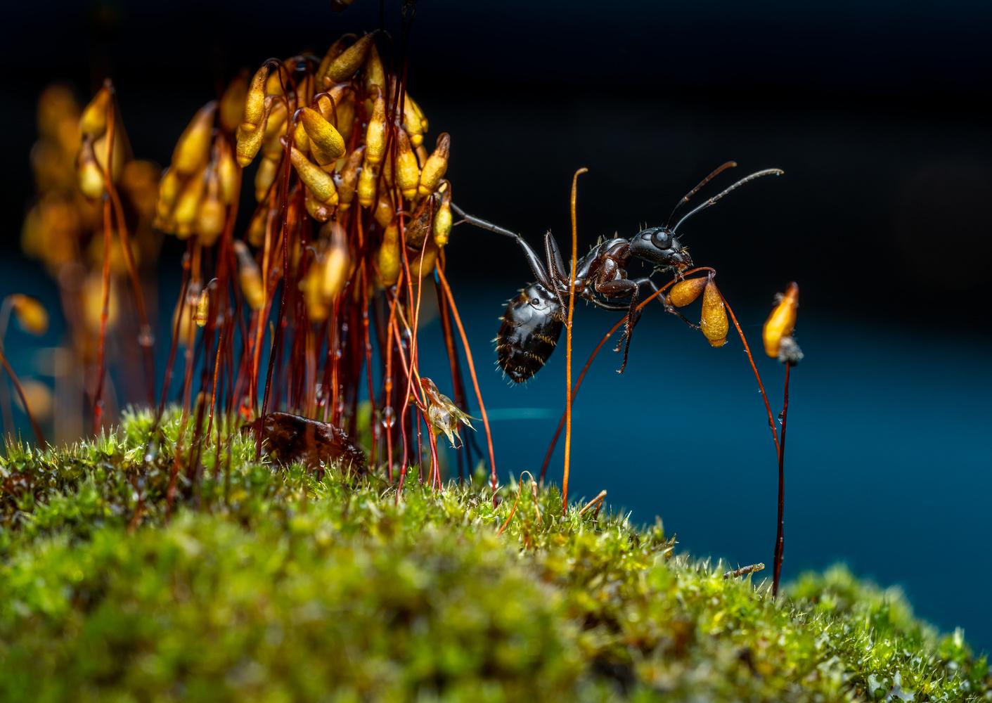Ant by Skyler Ewing