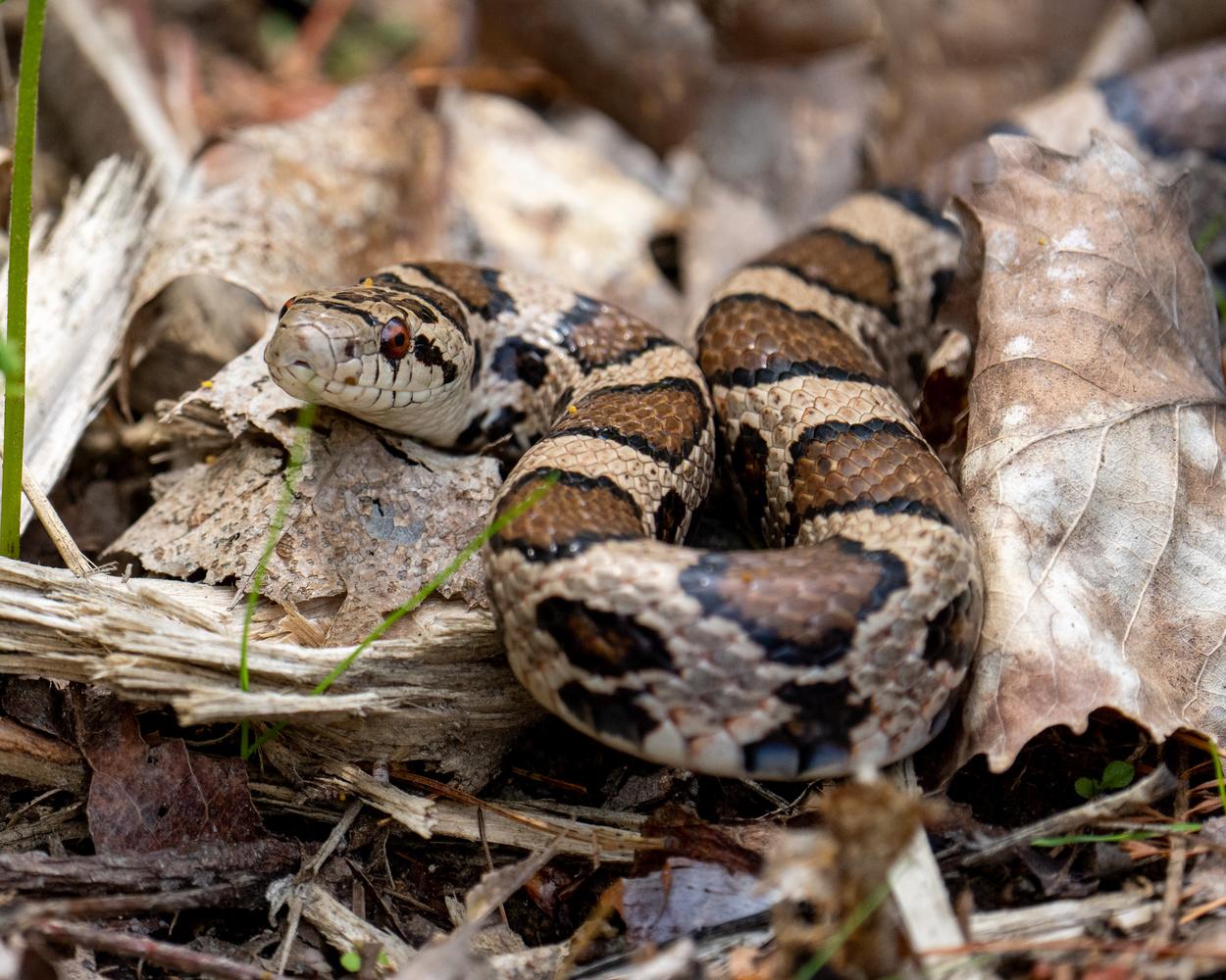 Snake I found in my garden by Skyler Ewing