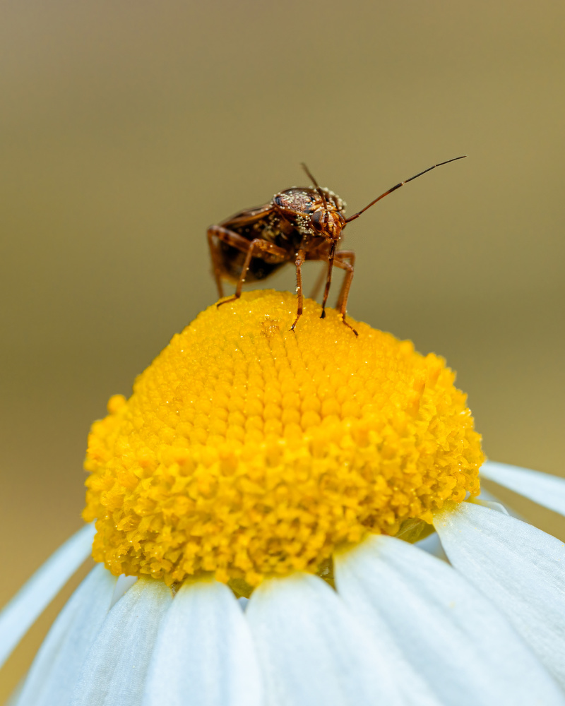 Insects by Skyler Ewing