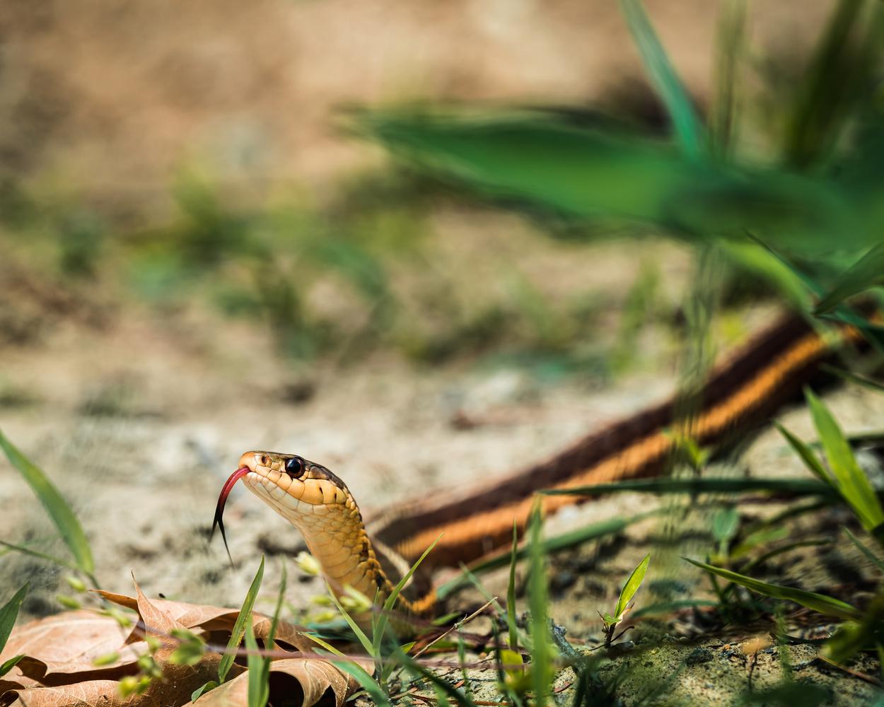 Snake by Skyler Ewing