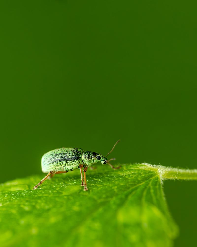 Bug by Skyler Ewing