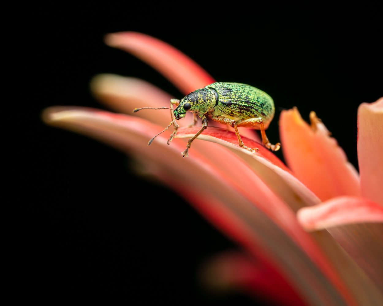 Insect by Skyler Ewing