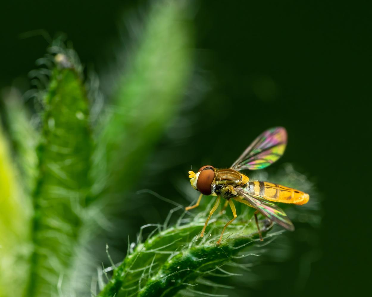 Fly by Skyler Ewing