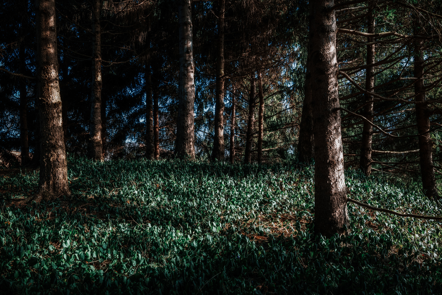 Forest by Skyler Ewing