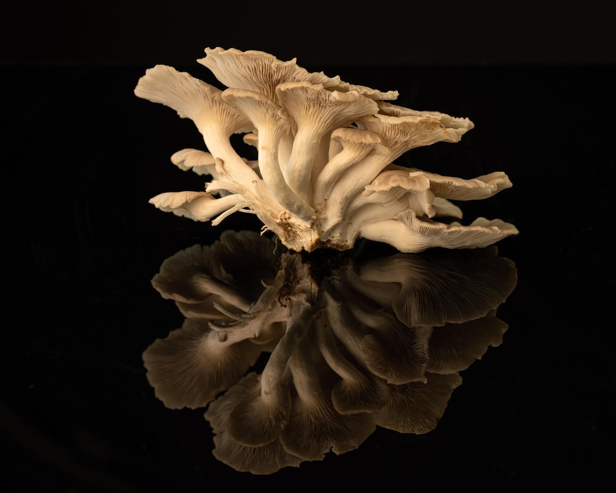 Mushroom by Skyler Ewing