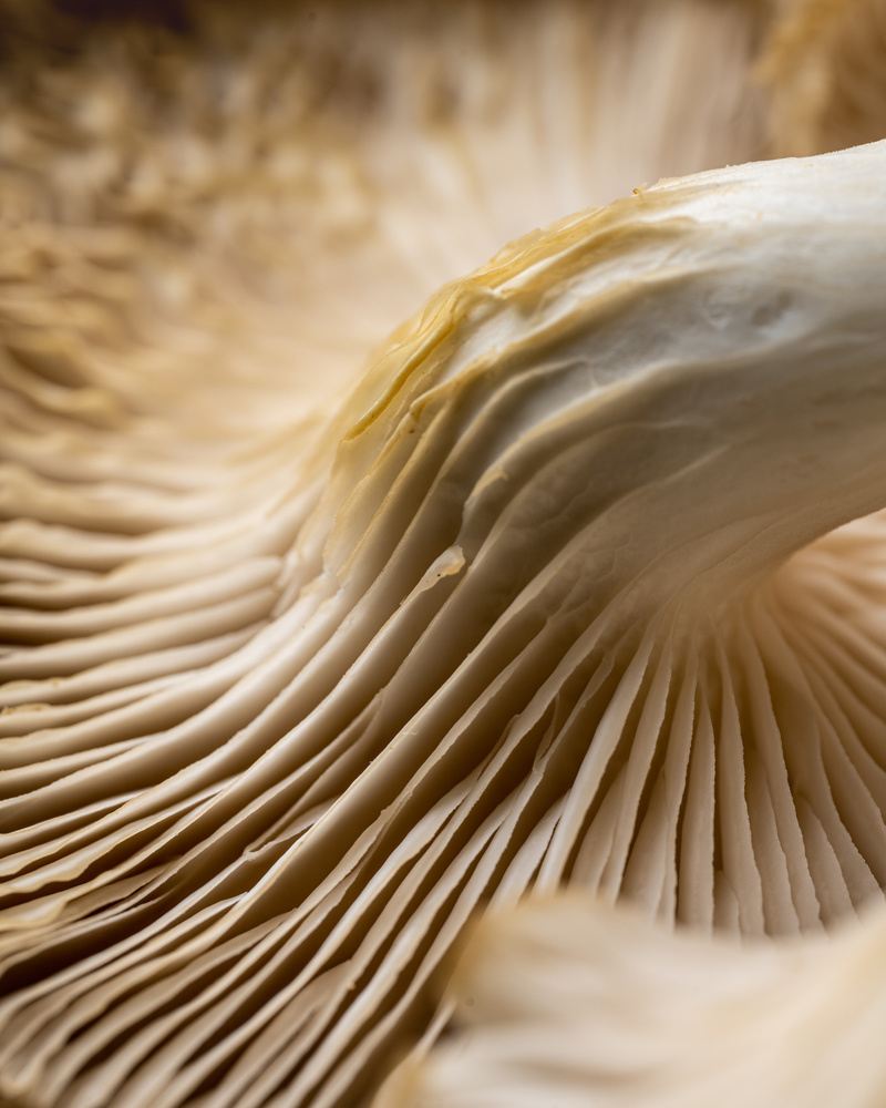 Mushrooms by Skyler Ewing
