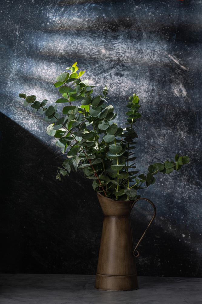 Eucalyptus by Skyler Ewing