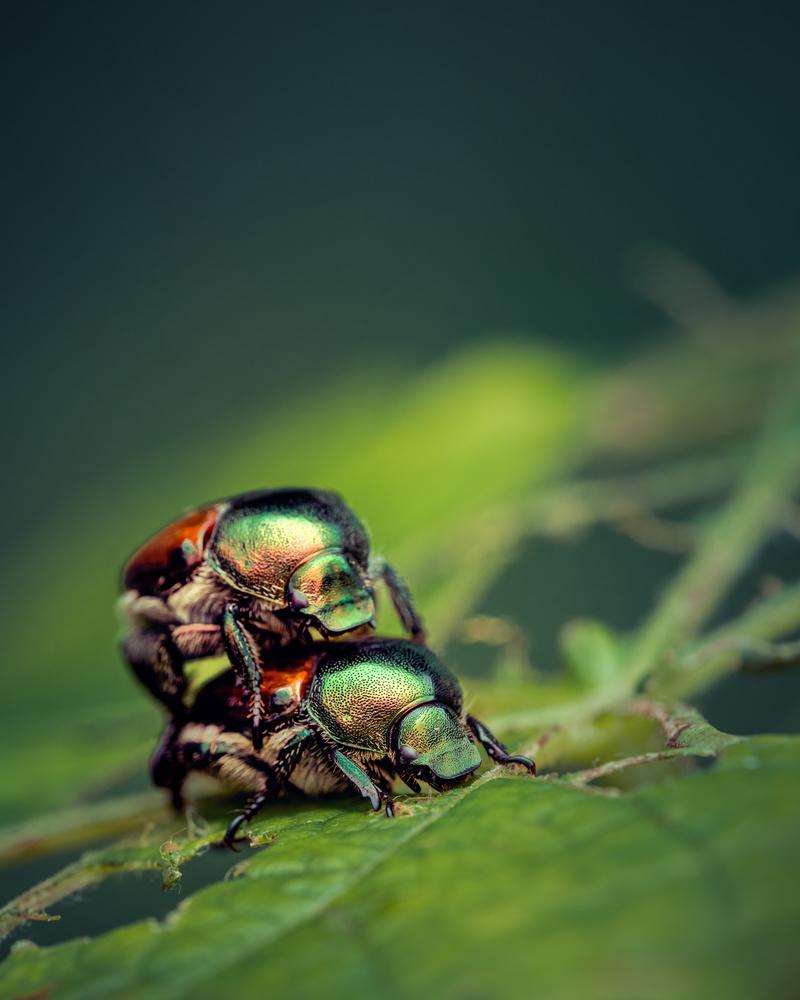 Beetles by Skyler Ewing