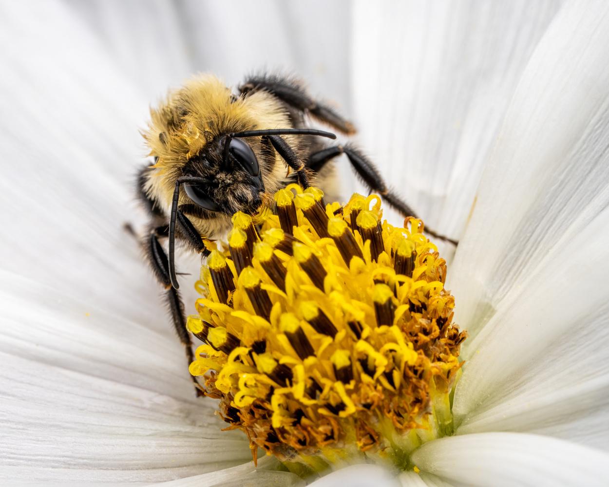 Bee by Skyler Ewing