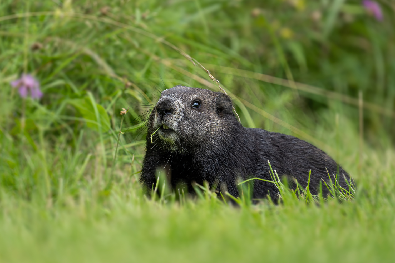 Groundhog by Skyler Ewing