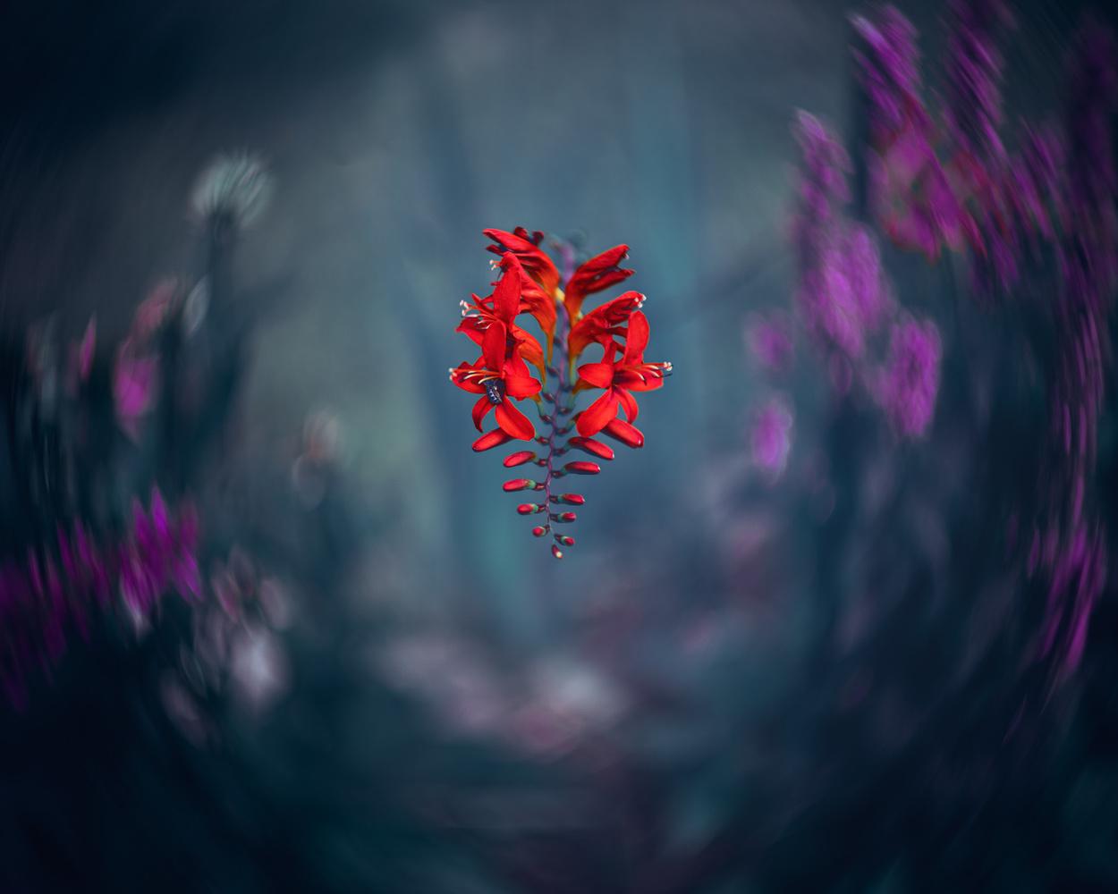 Flowers by Skyler Ewing