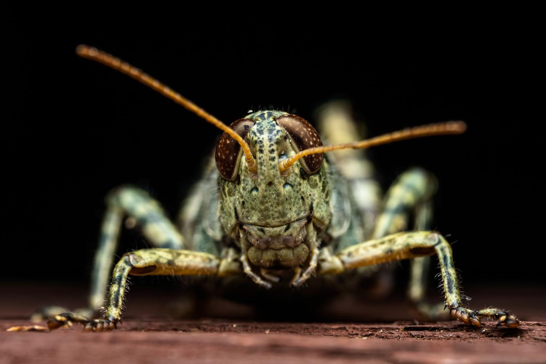 Grasshopper by Skyler Ewing