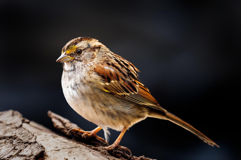 Bird by Skyler Ewing