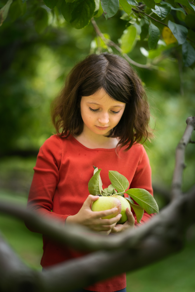 Apple picking by Skyler Ewing