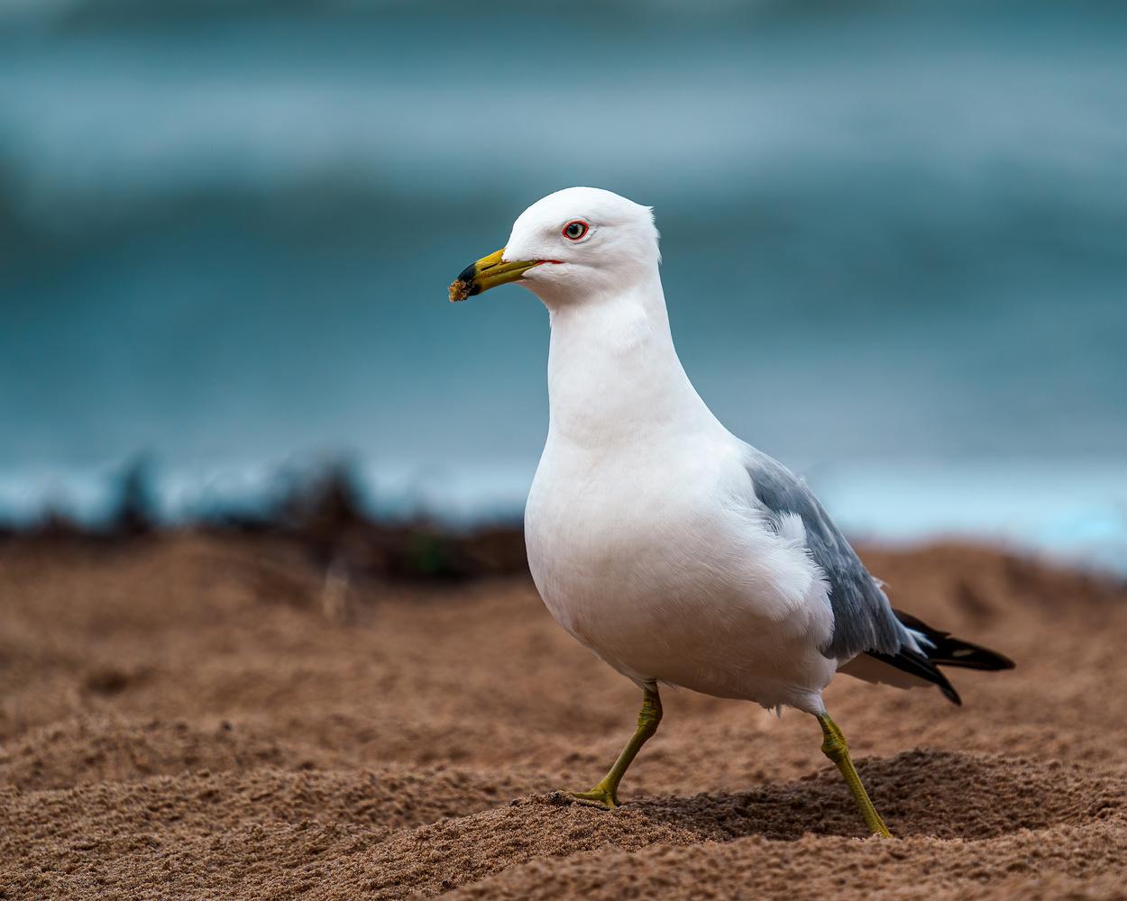 Seagulls by Skyler Ewing