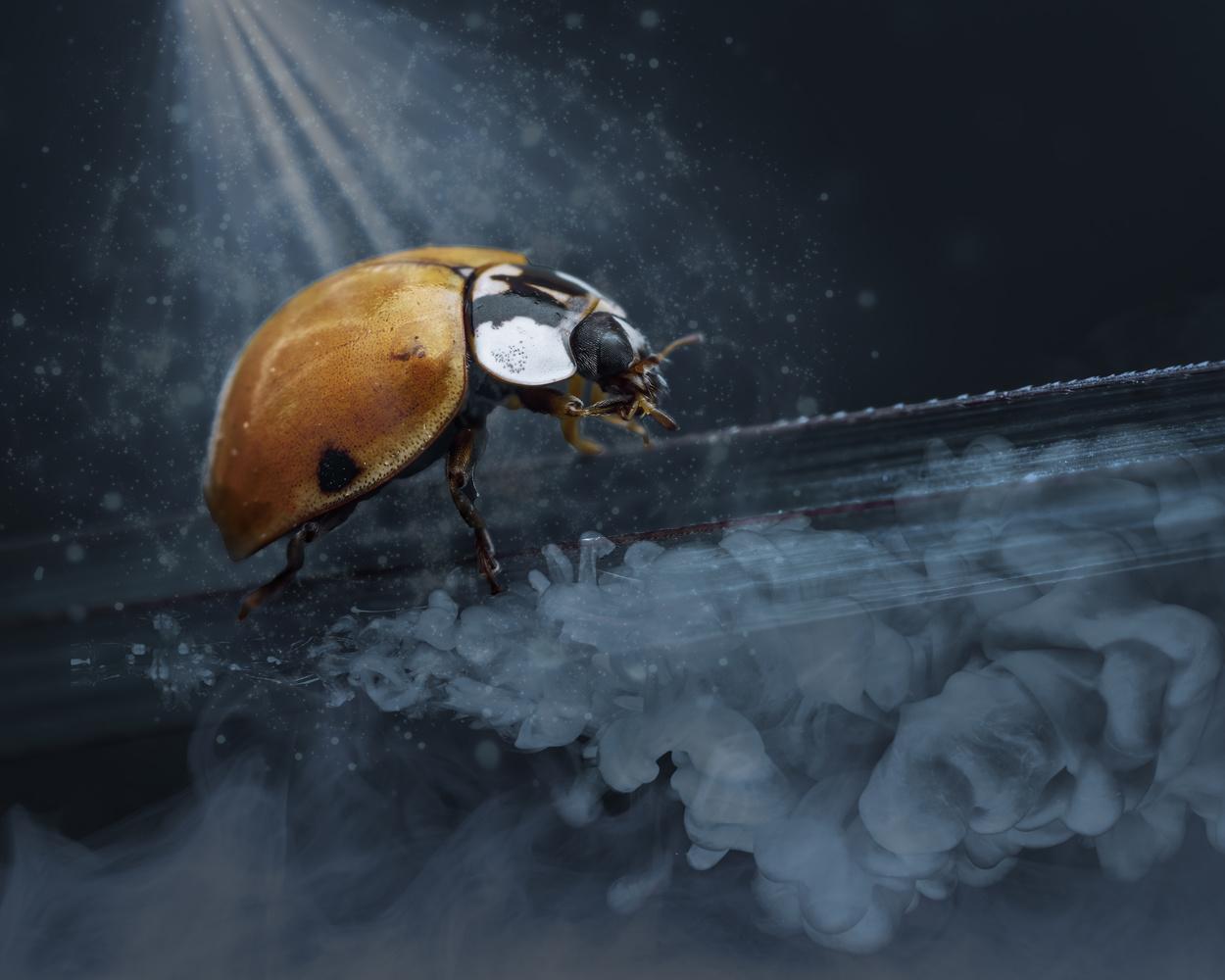 Fantasy ladybug by Skyler Ewing