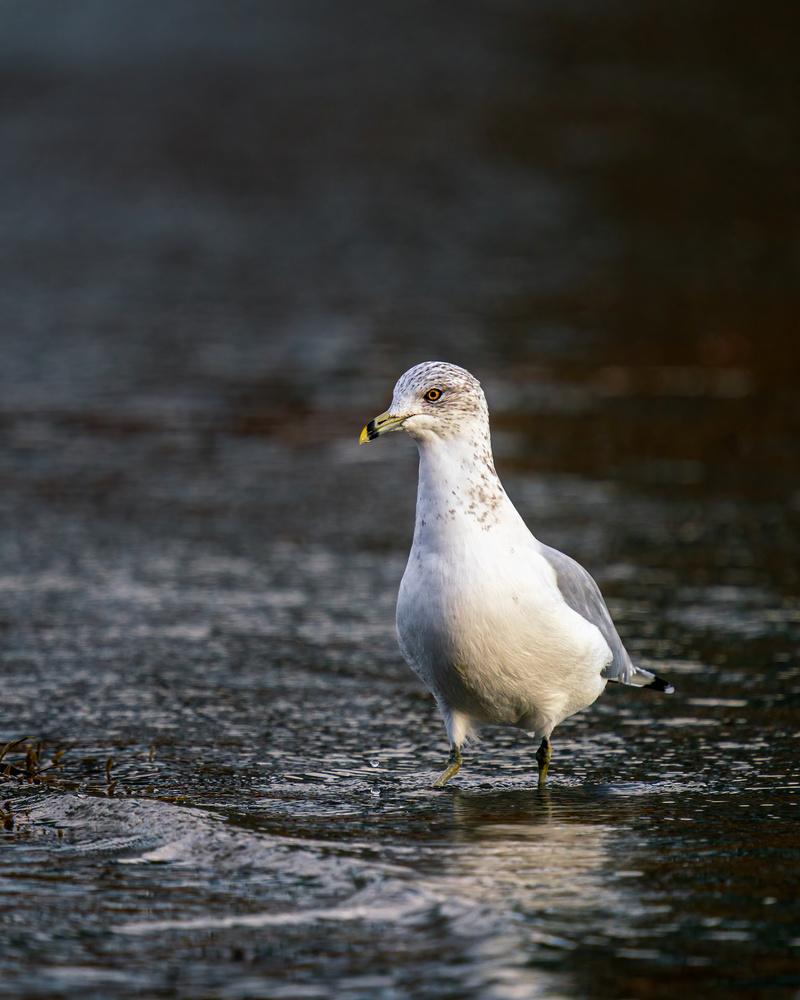 Seagull by Skyler Ewing