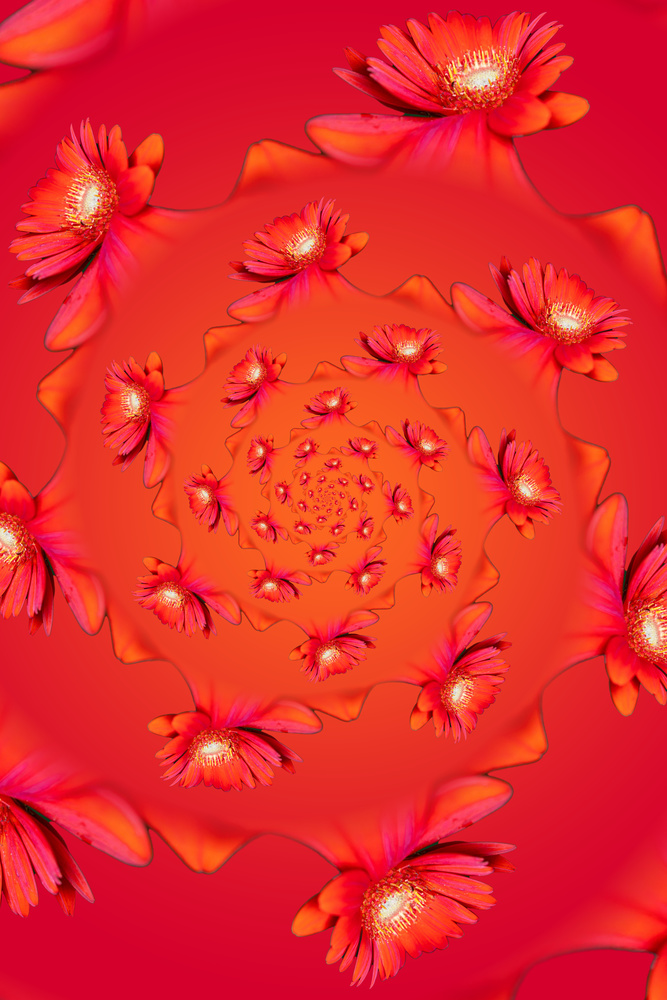 Abstract flowers by Skyler Ewing