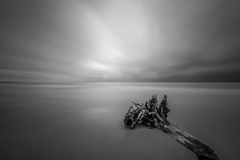 Driftwood by Skyler Ewing