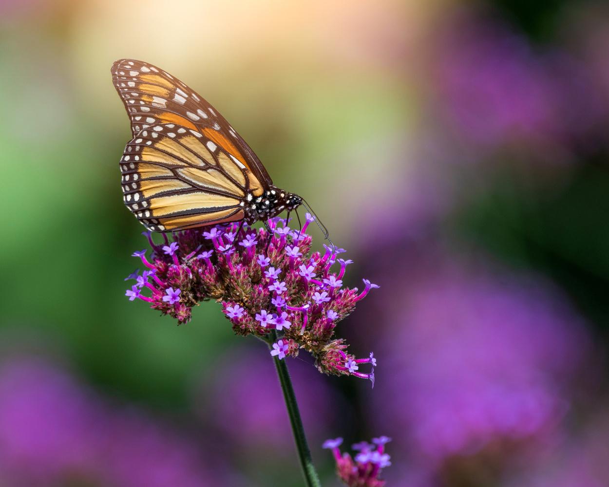 Butterfly by Skyler Ewing