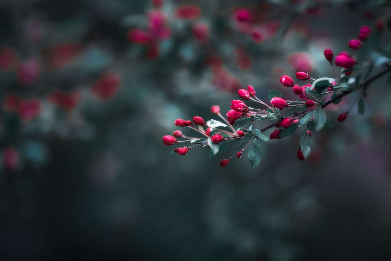 Flowering tree by Skyler Ewing