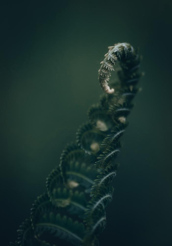 Ferns by Skyler Ewing