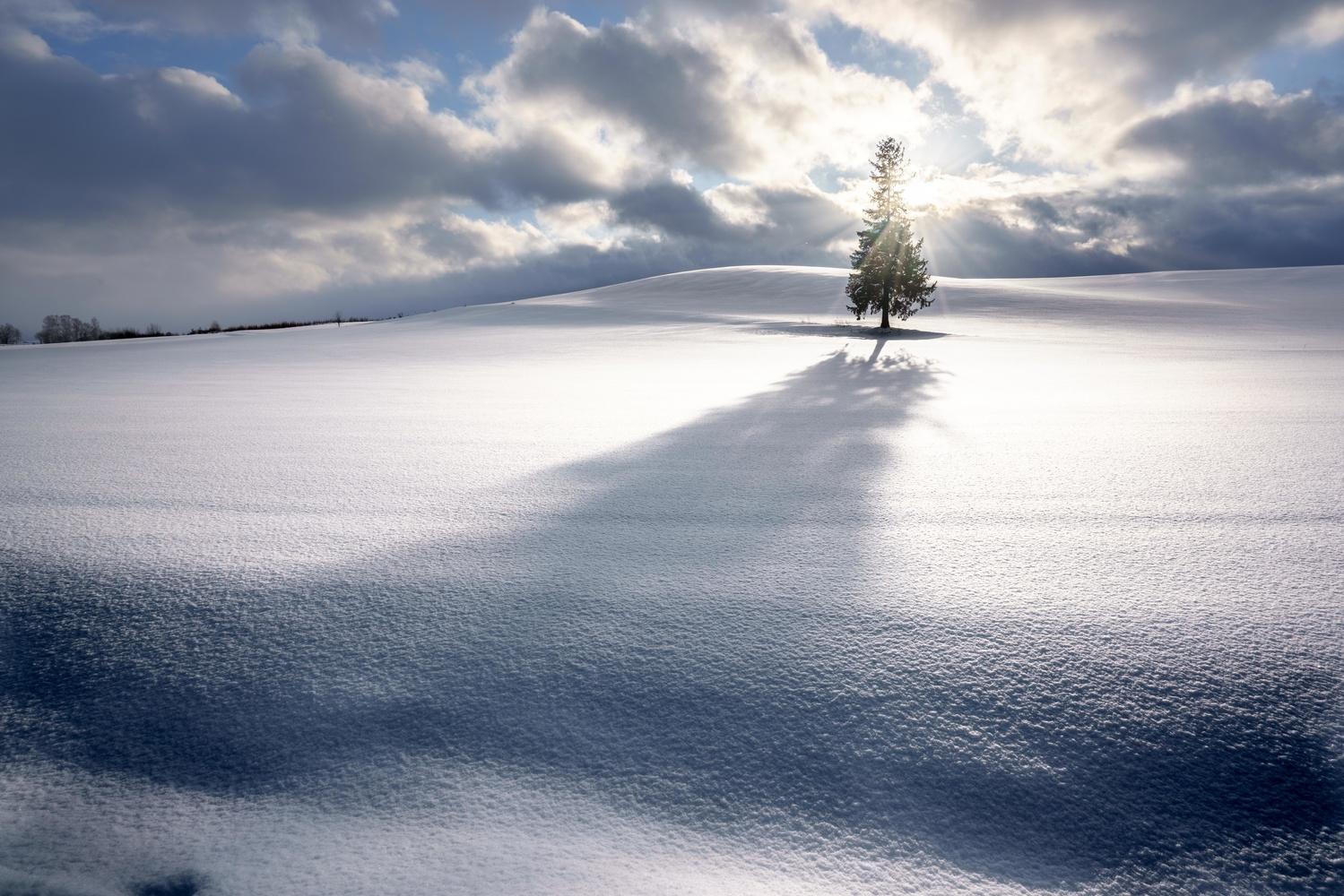 One tree by Roy Iwasaki